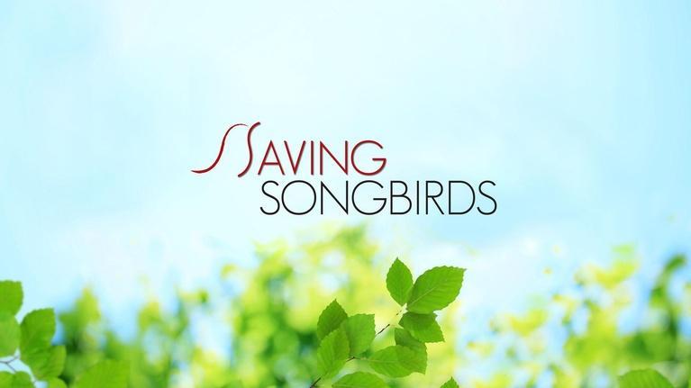 Saving Songbirds: Saving Songbirds