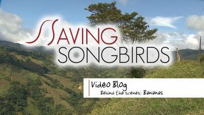 Saving Songbirds | Saving Songbirds | Bananas