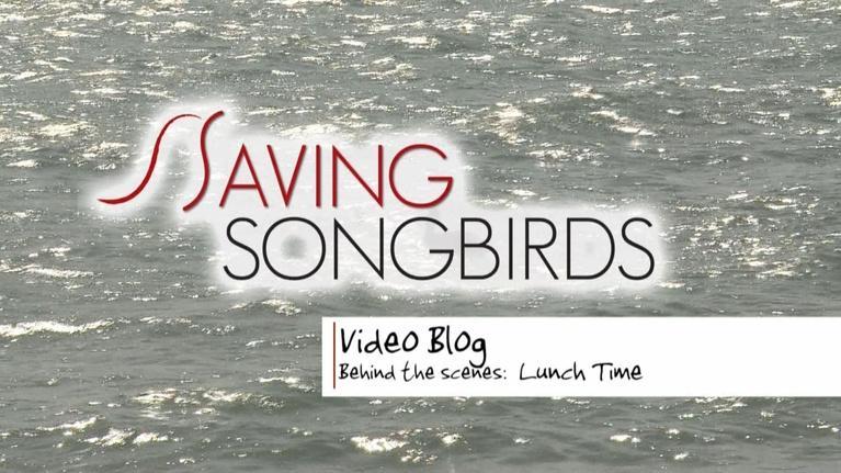 Saving Songbirds: Saving Songbirds | Lunch time in Jamaica