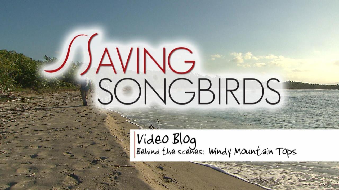 Saving Songbirds | Windy Mountain Tops