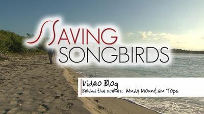 Saving Songbirds | Saving Songbirds | Windy Mountain Tops