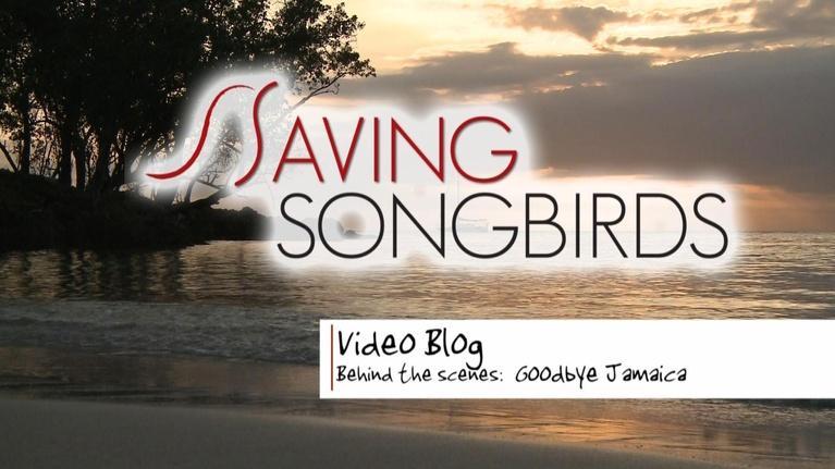 Saving Songbirds: Saving Songbirds | Goodbye Jamaica