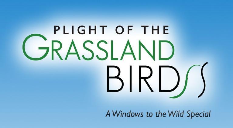 Plight of the Grassland Birds: Plight of the Grassland Birds
