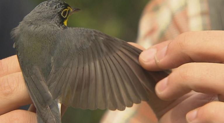 Saving Songbirds: Professor Len Reitsma