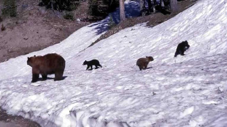 Wildlife Journal Junior: Tracking Winter Wildlife