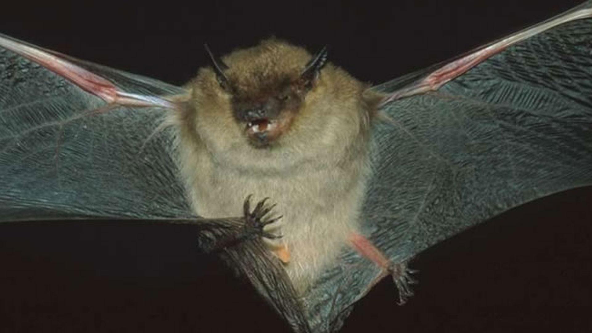 video in search of bats watch wildlife journal junior online