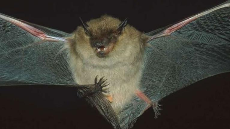 Wildlife Journal Junior: In Search of Bats