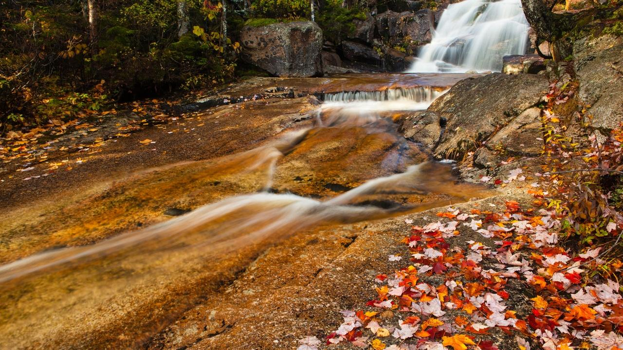Photographing Foliage at Zealand Falls