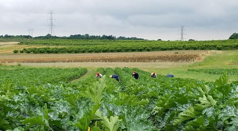 Maryland Farm & Harvest: Episode 605