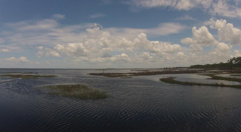 In the Grass, On the Reef: The True Value of a Salt Marsh