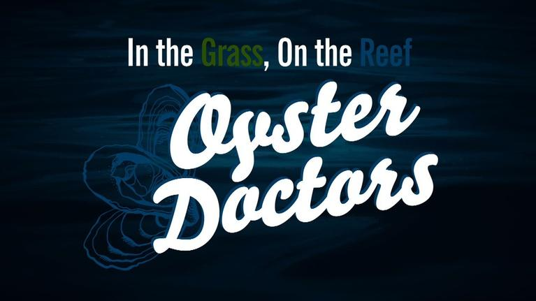 In the Grass, On the Reef: Oyster Doctors