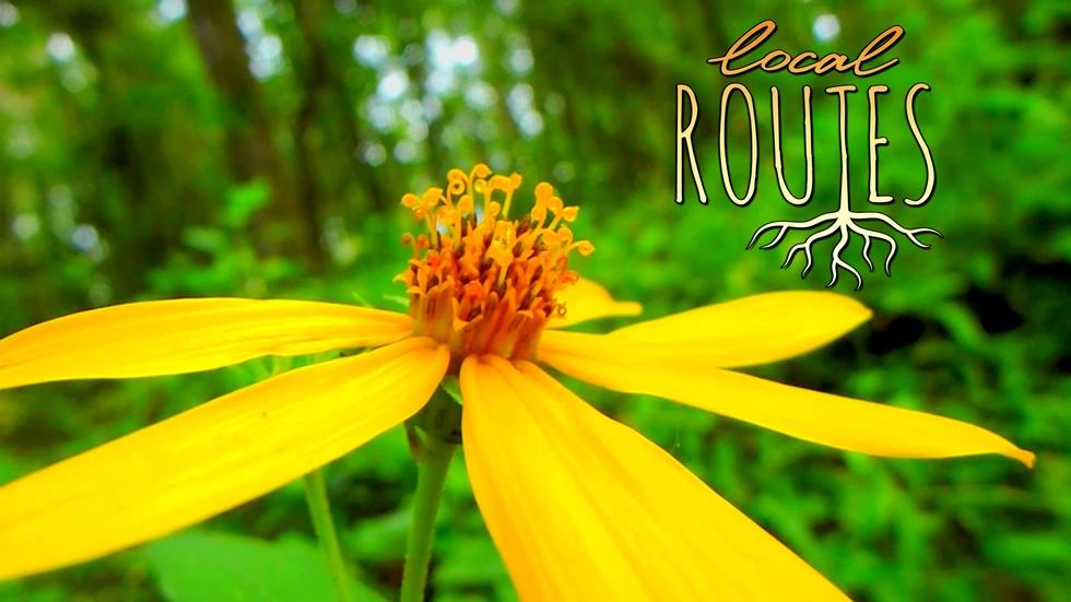Local Routes – Episode 105 image