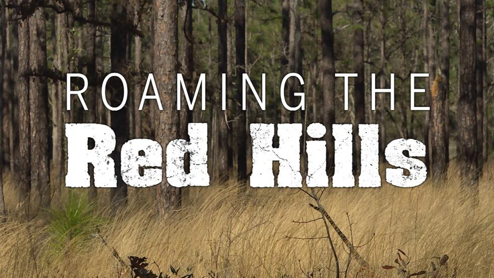 Roaming the Red Hills | The Complete Adventure image