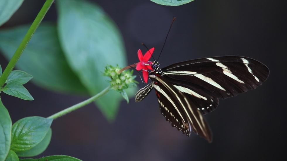Butterfly Gardening | Building a Pollinator Habitat at Home image