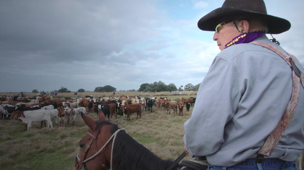 Have Camera, Will Ride!  The Great Florida Cattle Drive. image