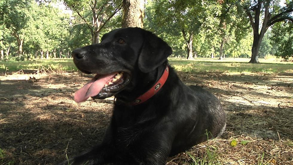 Tate the Truffle Dog image