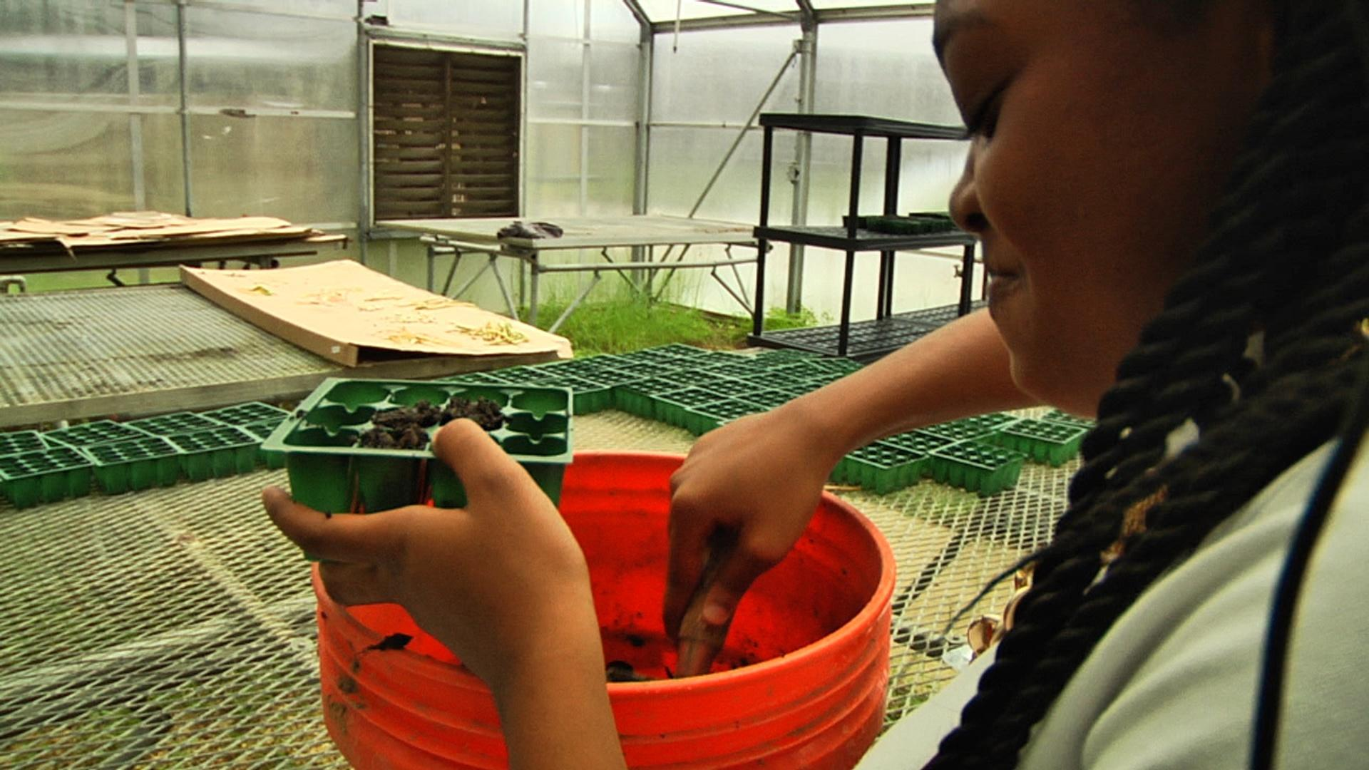 Success Academy | Learning STEM, Garden to Cafeteria
