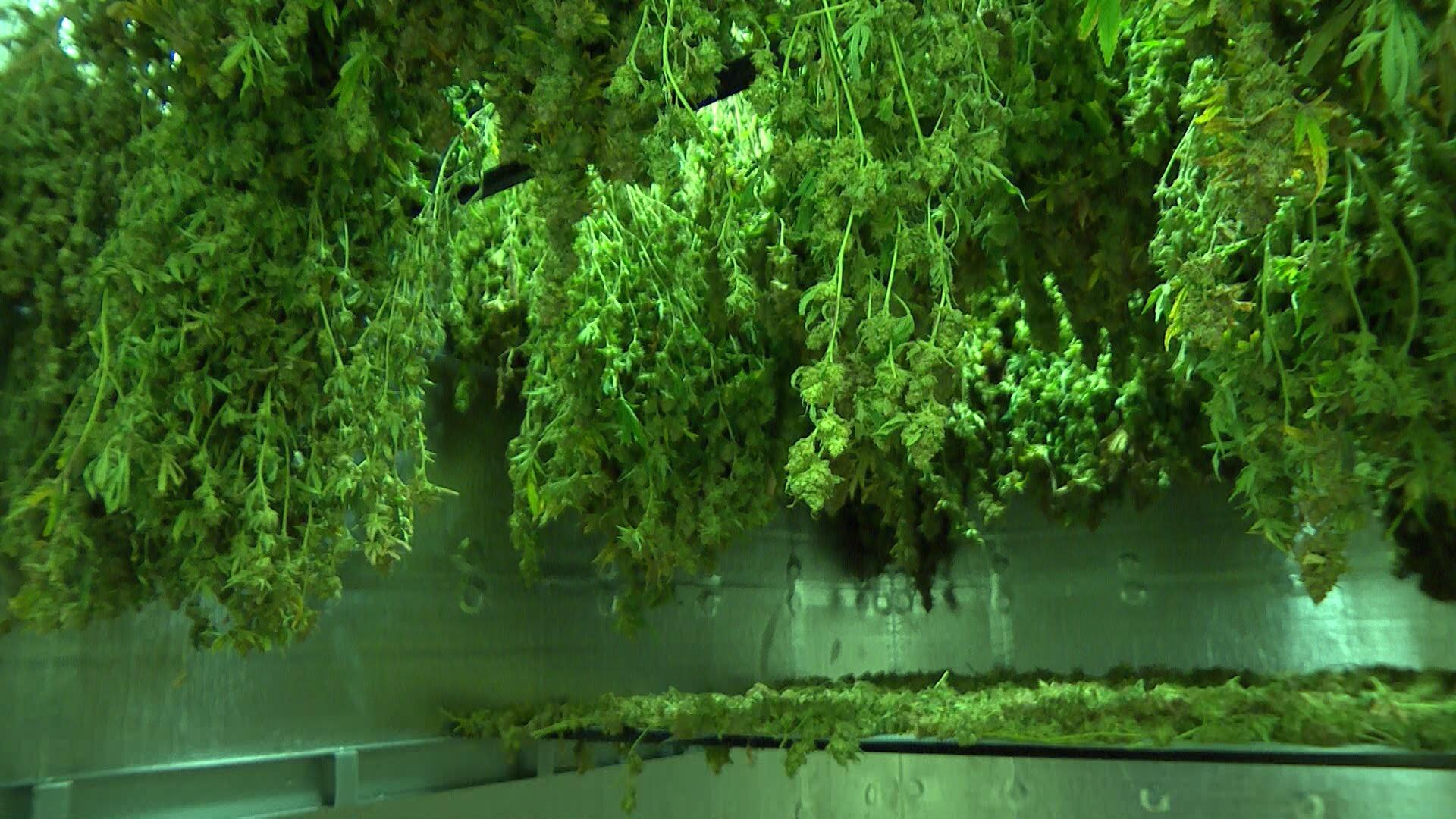 Behind the Scenes with Medical Marijuana