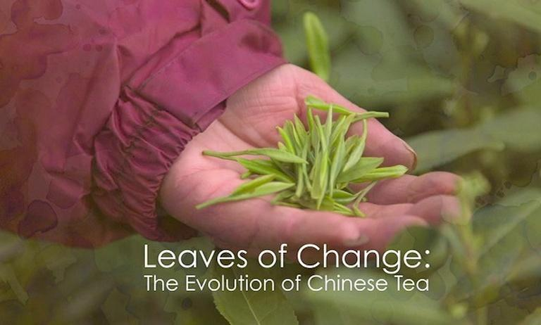 Leaves of Change: The Ageless Tradition of Chinese Tea