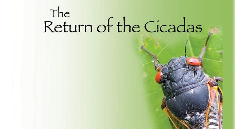 Return of the Cicadas: Return of the Cicadas