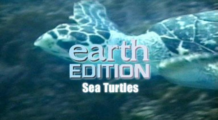 Earth Edition: Sea Turtles
