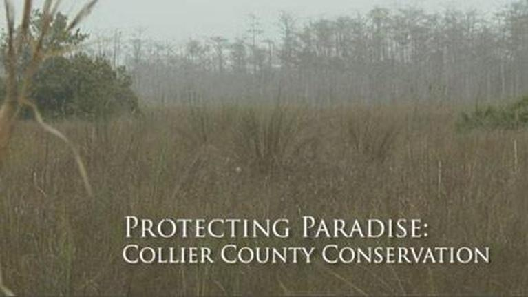Untold Stories: Protecting Paradise: Conserving Collier County