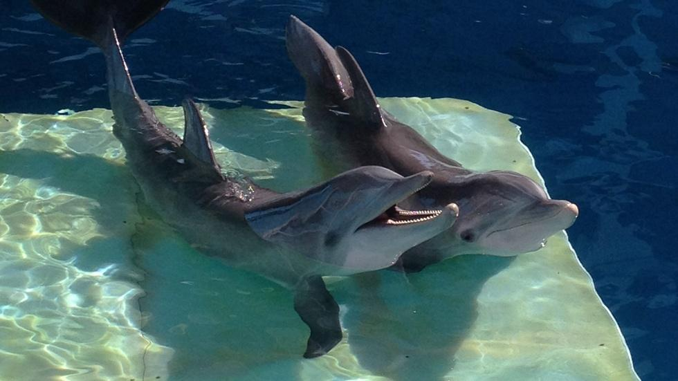 """Harry Connick, Jr. and Ashley Judd for """"Dolphin Tale 2"""" image"""