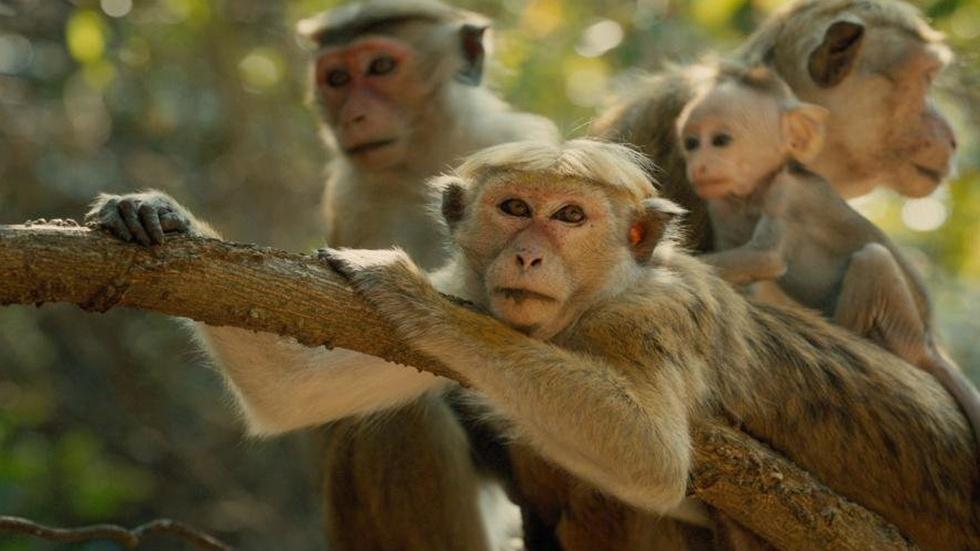 "Dr. Jane Goodall and Dr. Sanjayan for ""Monkey Kingdom"" image"