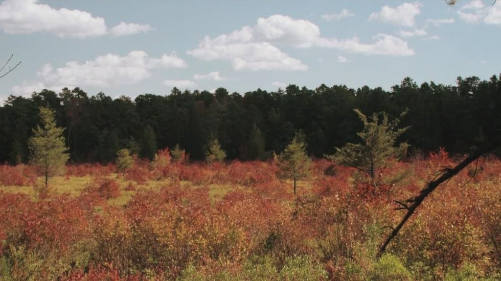 David Scott Kessler: The Pine Barrens image