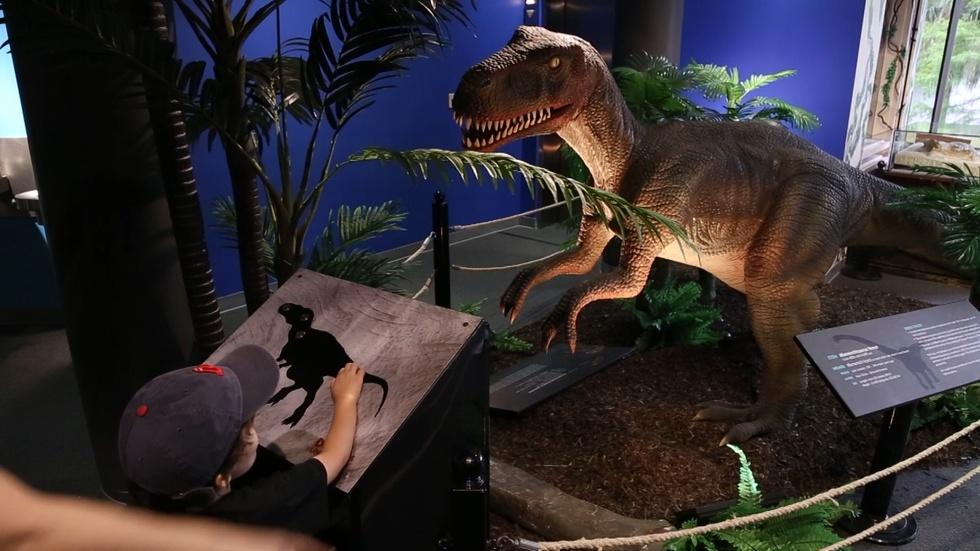 Dinosaurs Unearthed image