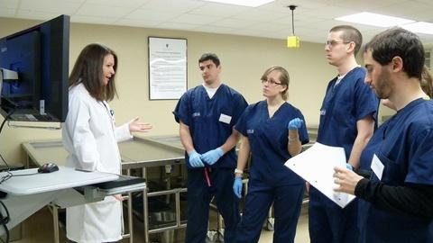 Long Island's Medical Schools