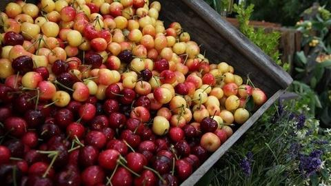 Bringing It Home with Laura McIntosh -- Fresh Cherry Recipes