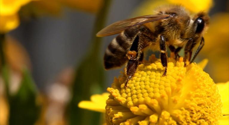 WLRN Nature: Backyard Beekeepers