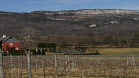 S2010 E16: Wine Sales Proposal