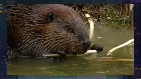MetroFocus -- May 8: Crime in Camden, Leave it to Beavers, Scuba Diving
