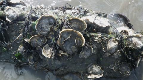MetroFocus -- 9/4: Oysters, Supreme City, NYRP, Special Olympics