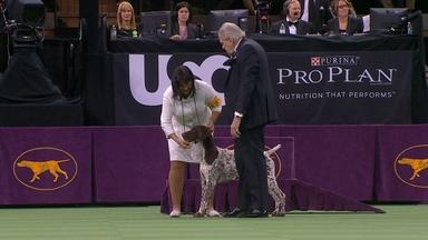 THE DOG SHOW - WESTMINSTER HITS MANHATTAN