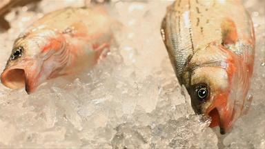 The Fishmongers of Manhattan