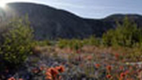 NOVA: Mt. St. Helens