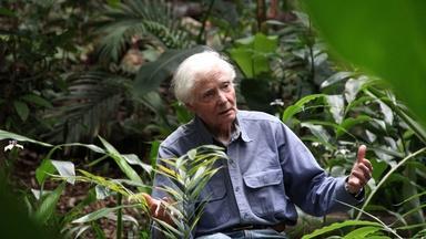 W.S. Merwin: To Plant a Tree