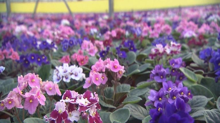 Volunteer Gardener: Volunteer Gardener 2443