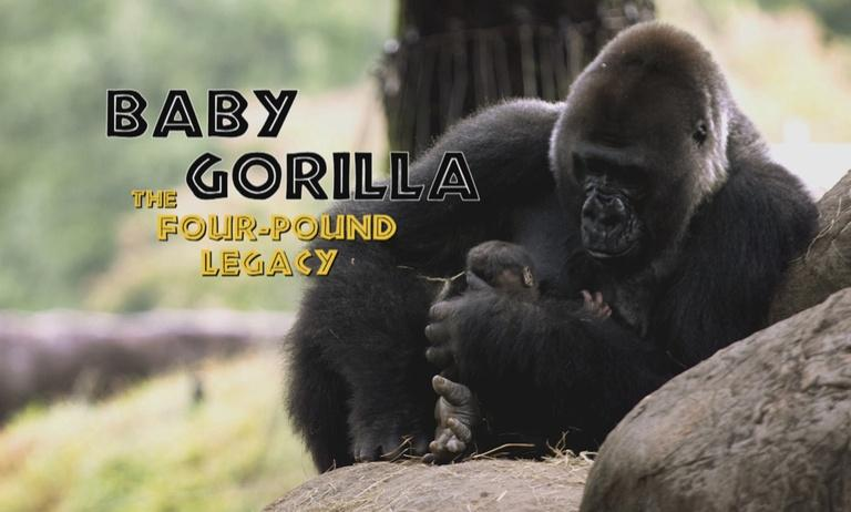 Baby Gorilla: The Four-Pound Legacy