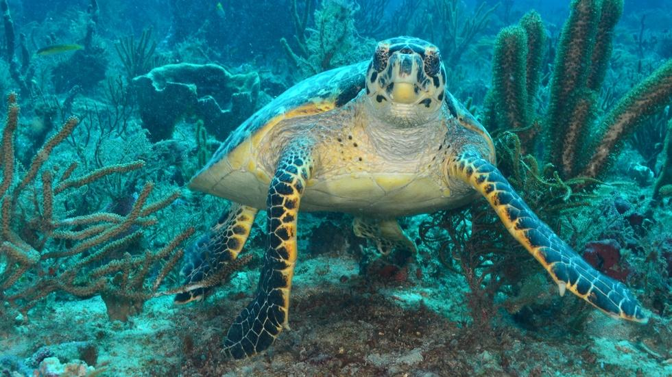 Sea Turtles: The Lost Years image
