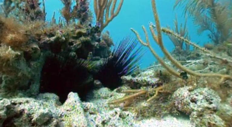 Wild Florida: Coral Reefs