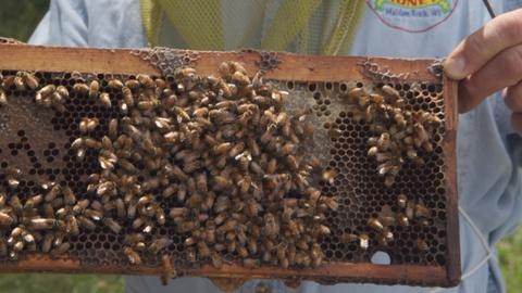Around the Farm Table -- Honey Hill Apiary