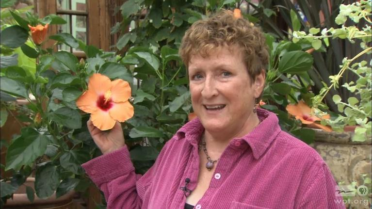 The Wisconsin Gardener: Celebrating Shelley Ryan
