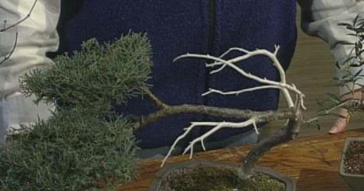 The Wisconsin Gardener Getting Started With Bonsai Season 5 Episode 2 Pbs