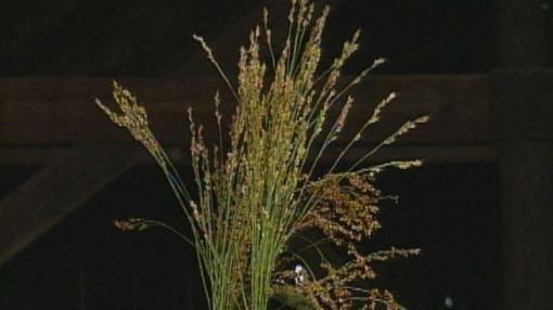 Making a Broom From Broom Corn