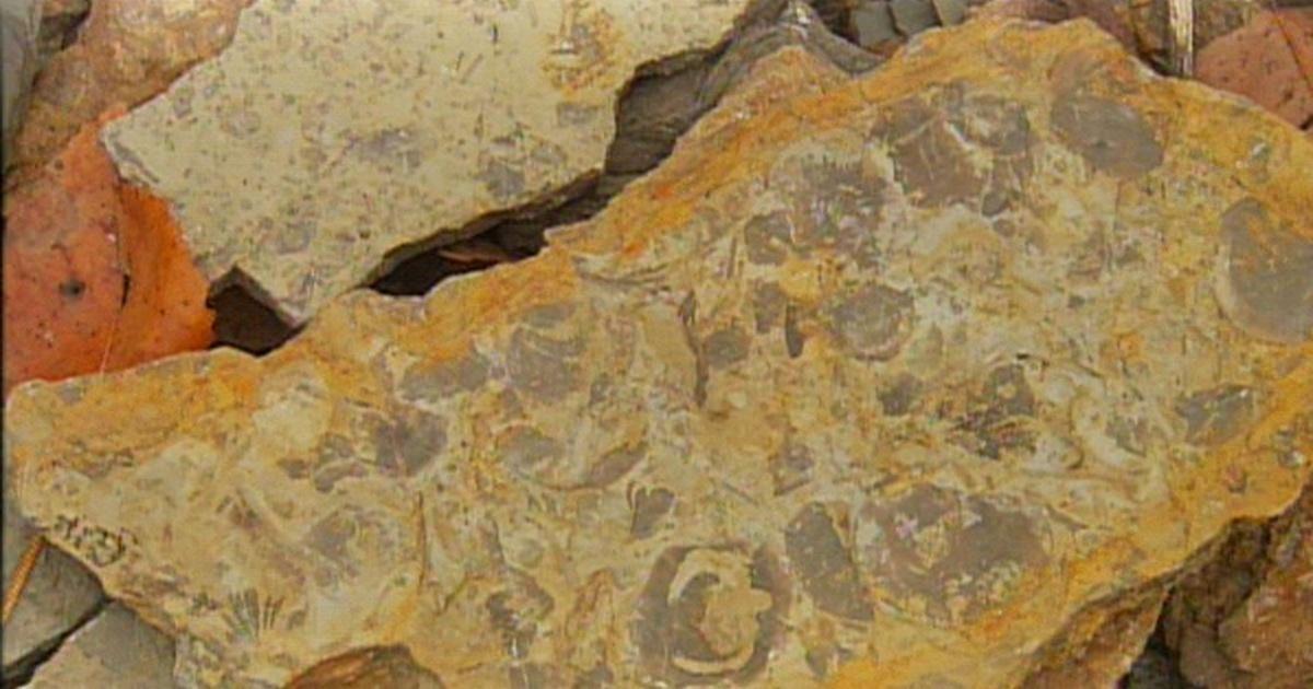 ohio rocks trammel fossil park k 12 multimedia resources thinktv