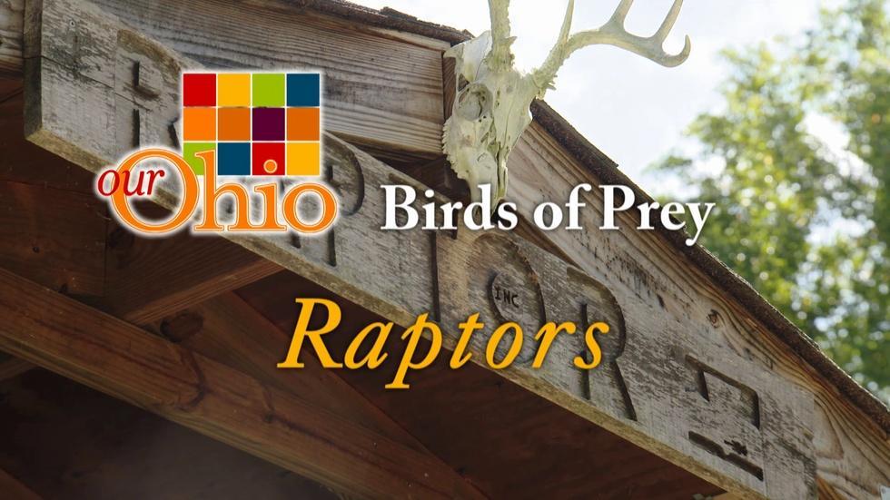 Birds of Prey aka Raptors image